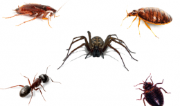 All kind of Crawling Insects Control